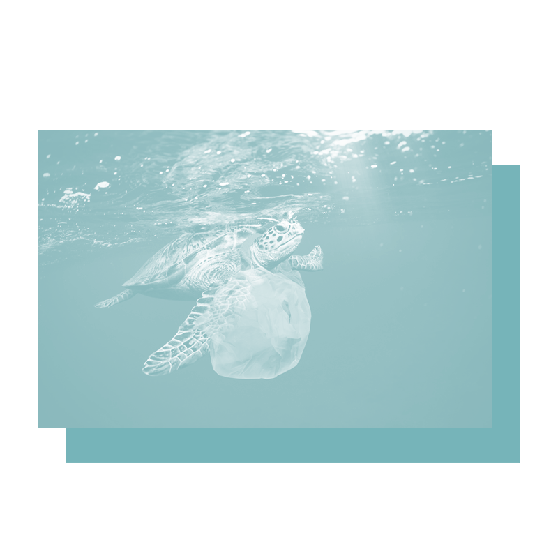A swimming tortoise caught in a plastic bag. Improve your team's awareness of environmental issues with our marine trash and debris training.